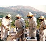 Honig aus aller Welt